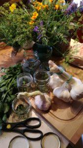 Knoblauch, Herbstgruß für die Küche