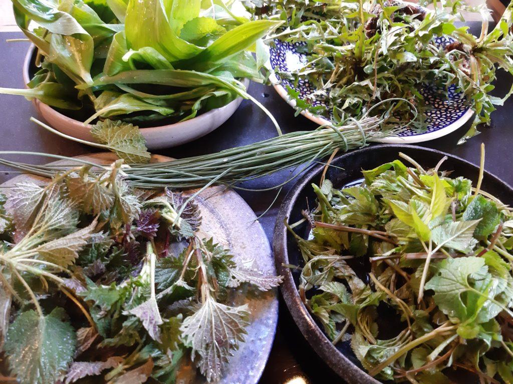 Brennnessel – das Gemüse, das überall wächst