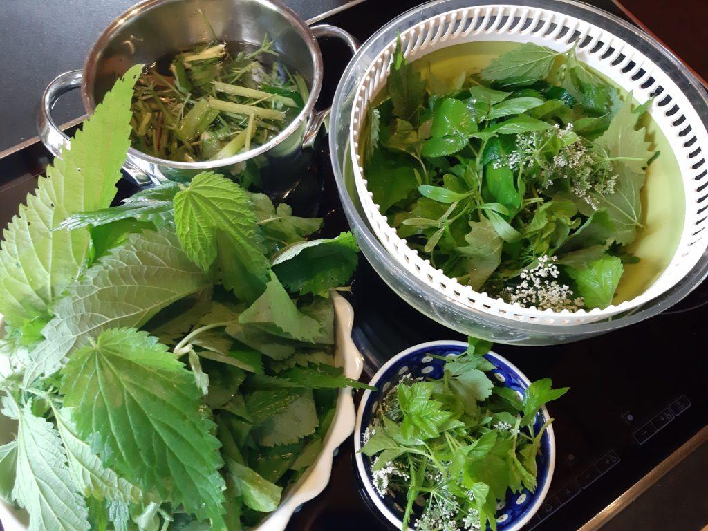 Ernte von heute für Gemüse, Salat, Chips und Tee
