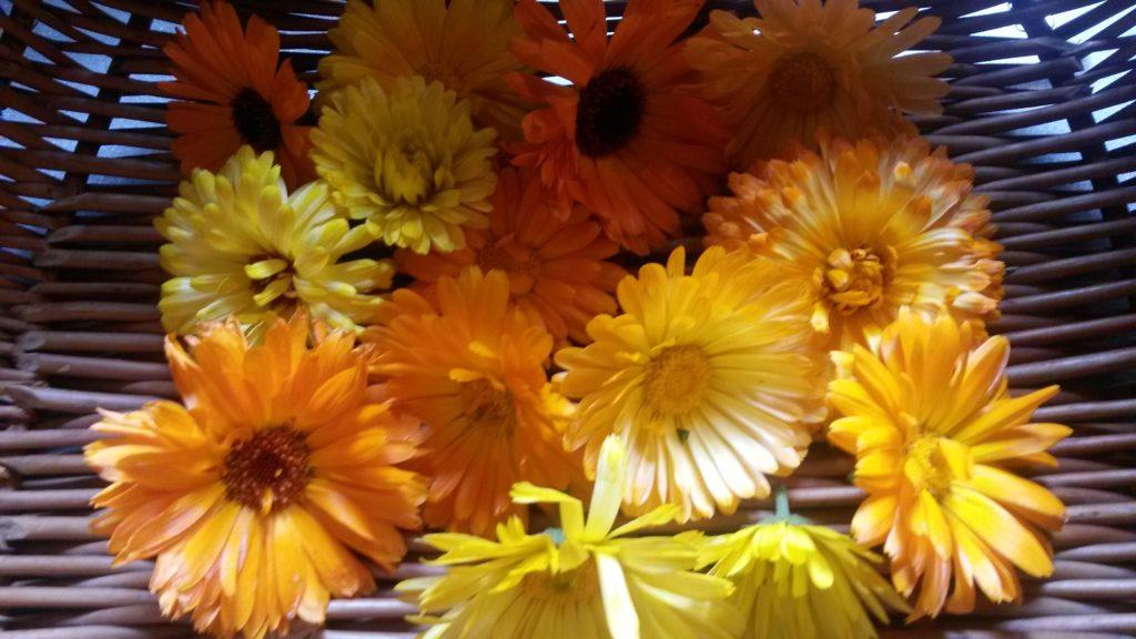 kessbare Blüten als Deko für den Shake mit Molke