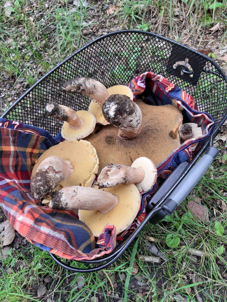 Pilze am besten im Korb transportieren