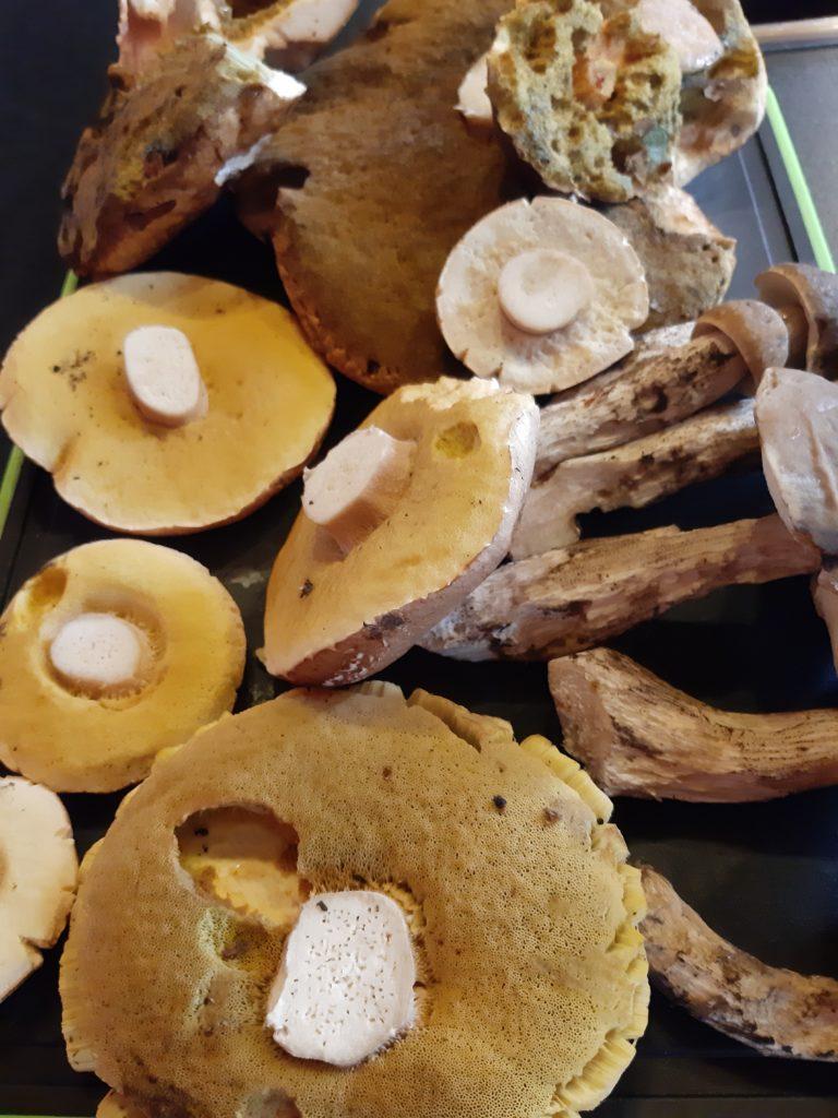 Pilze kühl aufbewahren