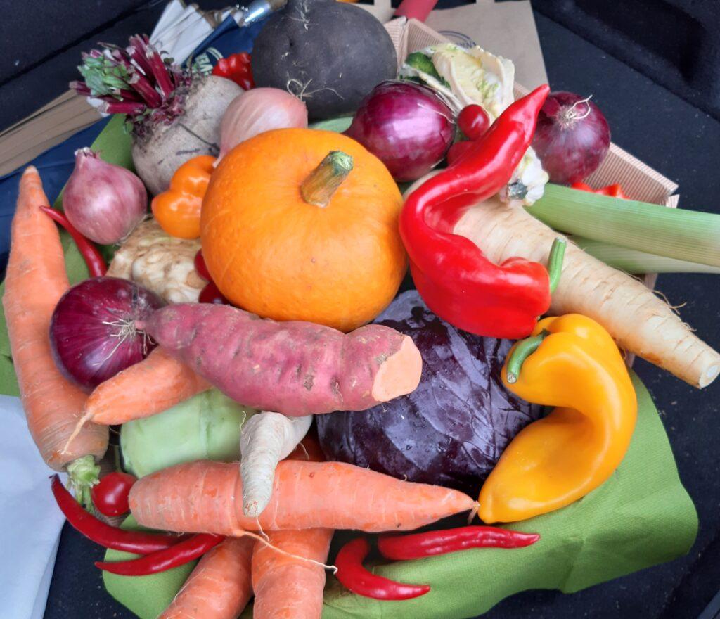 viel Gemüse zum Kürbis